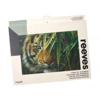 Piešimas pagal skaičius Reeves Artist Collection 30x40cm Tiger